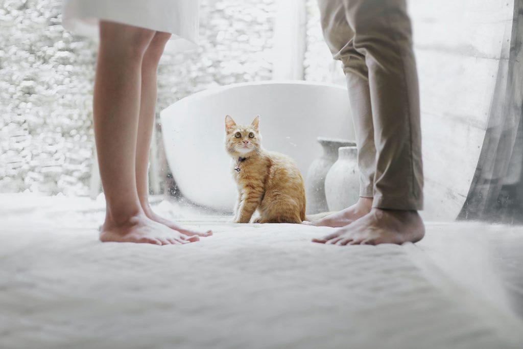 Katt på toa
