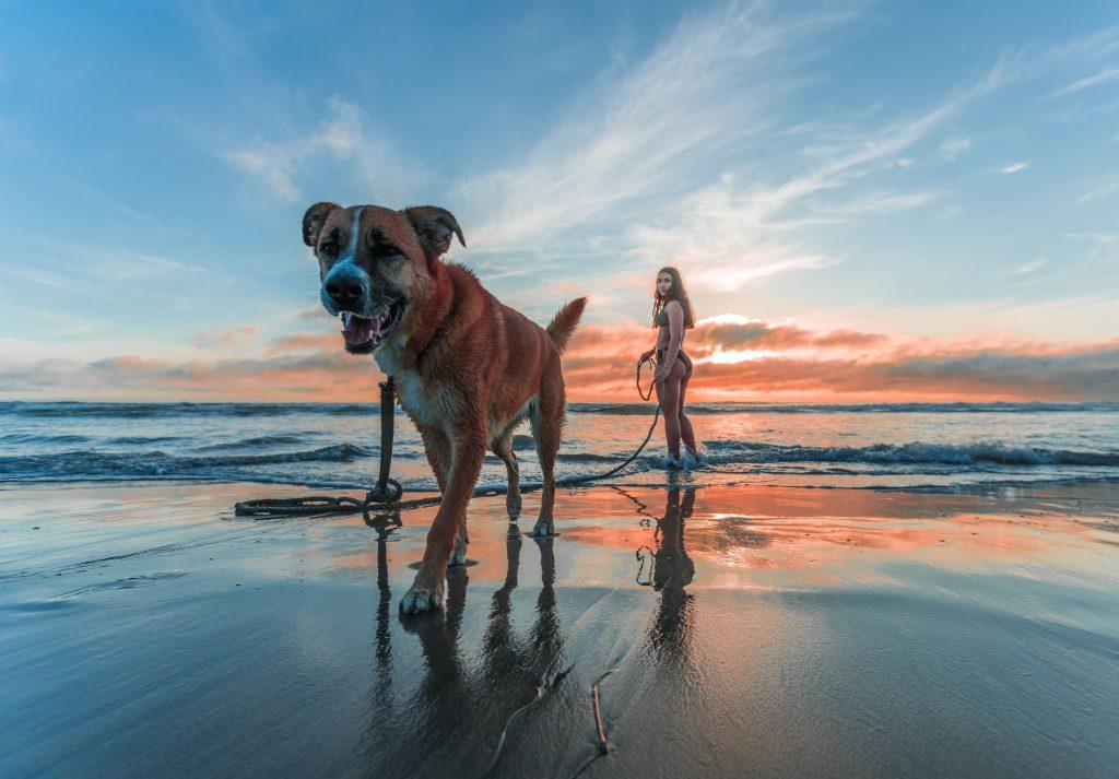 Med hund i solnedgången